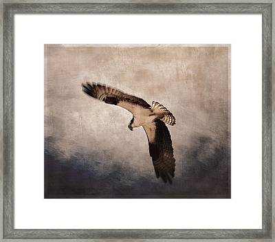 Osprey Over The Columbia River Framed Print by Carol Leigh
