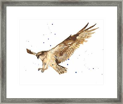 Osprey Painting Framed Print by Alison Fennell