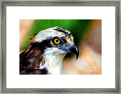 Framed Print featuring the photograph Osprey Portrait by Dan Friend