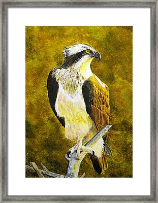 Framed Print featuring the painting Osprey Profile by Stan Tenney