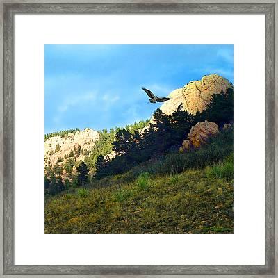 Osprey Framed Print by Ric Soulen