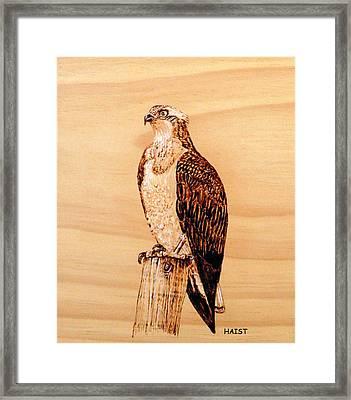 Osprey Framed Print