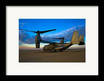 Osprey Framed Prints