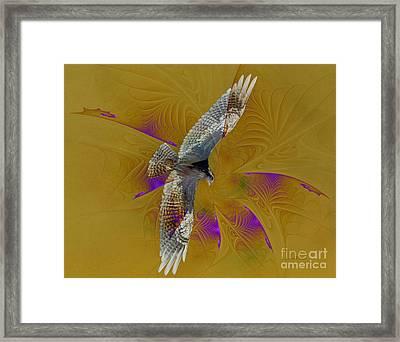 Osprey Wild Framed Print by Deborah Benoit
