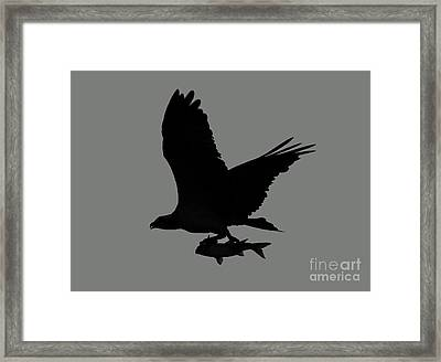 Framed Print featuring the photograph Osprey With A Fish Photo by Meg Rousher