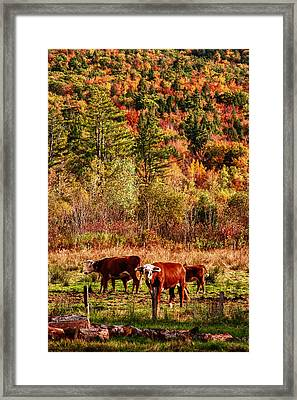 Framed Print featuring the photograph Cow Complaining About Much by Jeff Folger