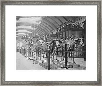 Osteological Gallery Framed Print
