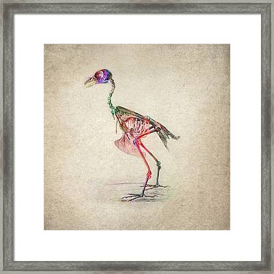 Osteology Of Birds Framed Print