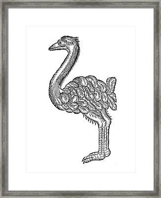 Ostrich, 16th Century Framed Print by Granger