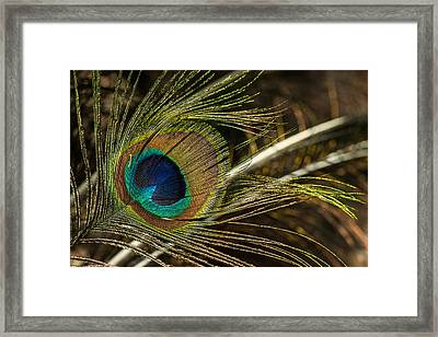 Ostrich Feather Tip Framed Print by Douglas Barnett