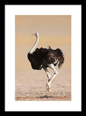 Sandy Neck Framed Prints