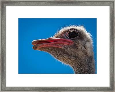 Ostrich Profile Framed Print by Jean Noren