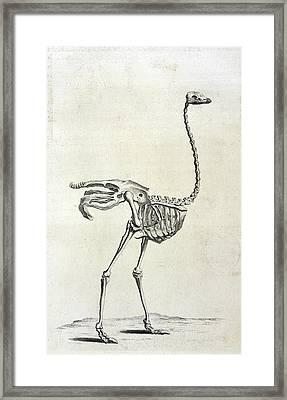Ostrich Skeleton Framed Print