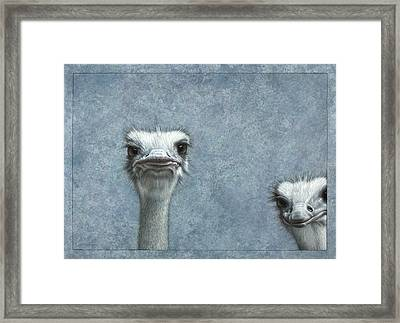 Ostriches Framed Print by James W Johnson