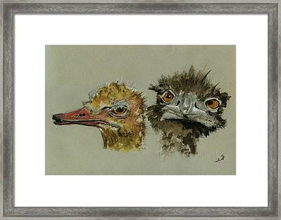 Ostrichs Head Study Framed Print by Juan  Bosco