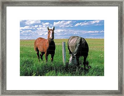 Other Side Of The Fence Framed Print by Terry Reynoldson