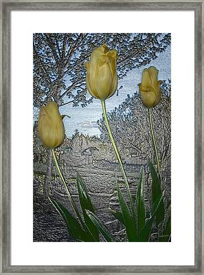 Other World Tulips Framed Print