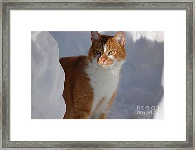 Framed Print featuring the photograph Otis by Christiane Hellner-OBrien