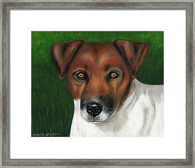 Otis Jack Russell Terrier Framed Print by Michelle Wrighton