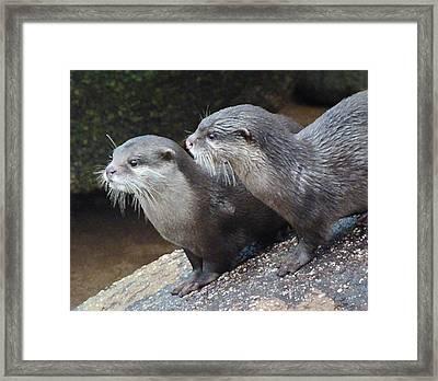 Otter Alert Framed Print by Margaret Saheed
