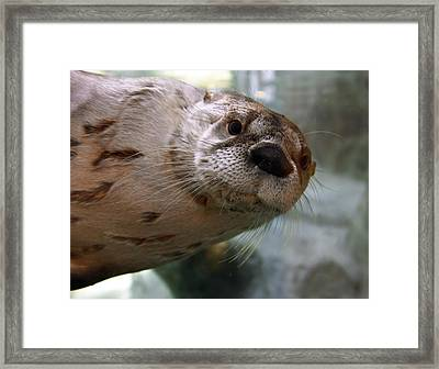 Otter Be Lookin' At You Kid Framed Print