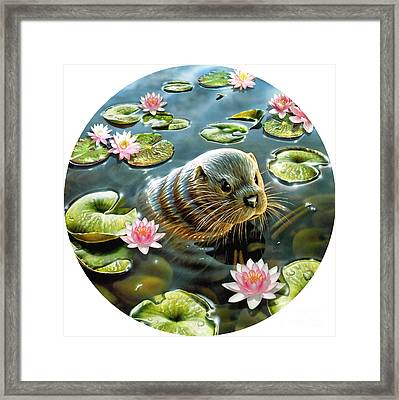Otter In Water Lilies Framed Print by Adrian Chesterman