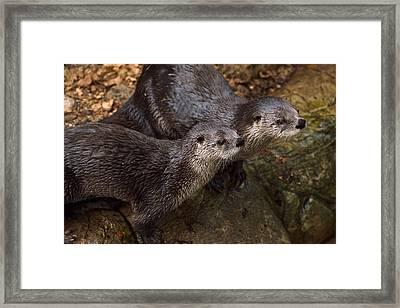 Otterhood Framed Print by Joshua McCullough