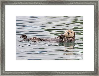 Otterly Adorable Framed Print