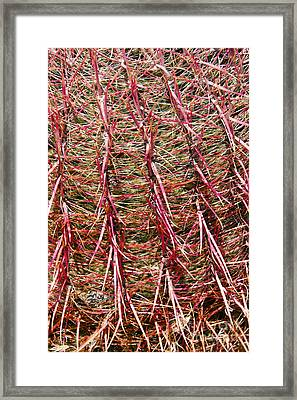 Ouch Framed Print by Bob Phillips