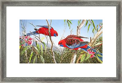 Our Beautiful Home - Crimson Rosellas Framed Print
