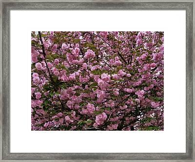 Our Cherry Tree Framed Print by Mimi Saint DAgneaux