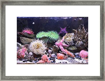 Our Colourful Underwater World Framed Print