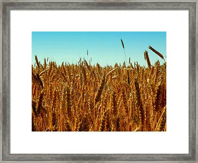 Our Daily Bread Framed Print by Karen Wiles