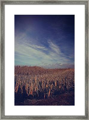 Our Day Will Come Framed Print