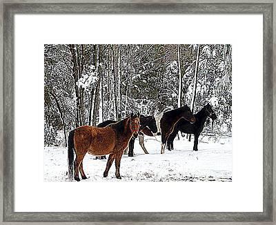 Our Horses Framed Print