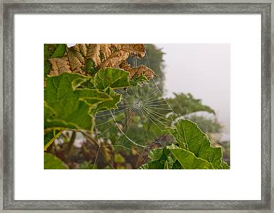 Fragility Framed Print by Dave Byrne