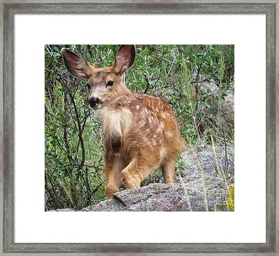 Out Back Framed Print by Harriet Peck Taylor