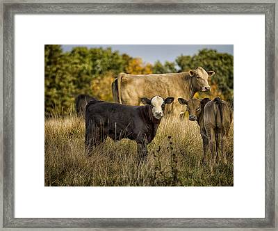 Out For A Graze Framed Print by Linda Tiepelman