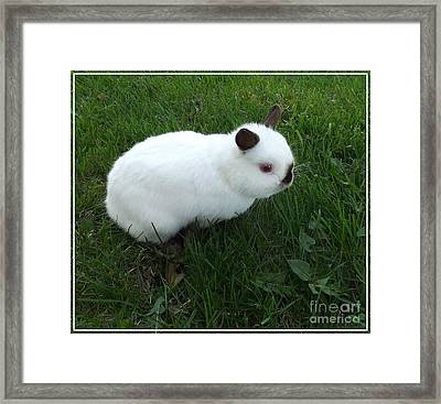 Out For A Stroll Framed Print by Sara  Raber