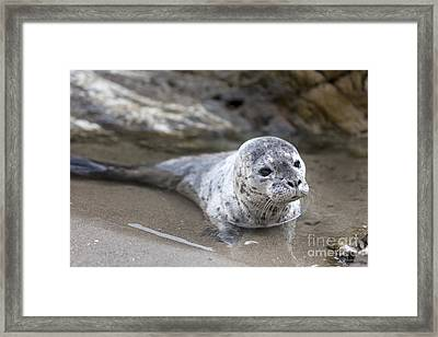 Out For A Swim Framed Print by David Millenheft