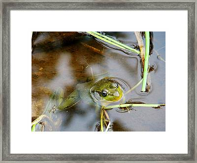 Out For Some Fresh Air... And A Snack Framed Print