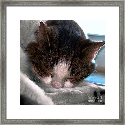 Out For The Count Framed Print