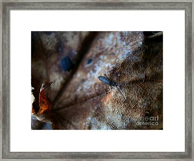 Out From The Blur Framed Print by Steven Valkenberg