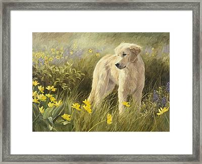 Out In The Field Framed Print by Lucie Bilodeau
