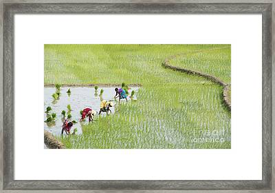 Out In The Fields Framed Print