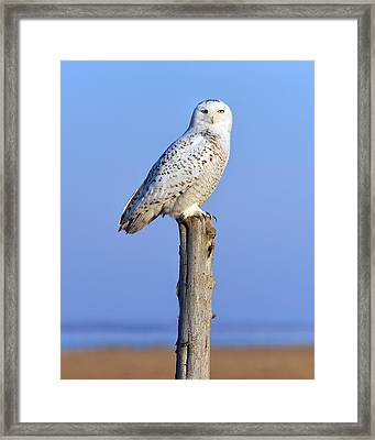 Out In The Open Framed Print by Tony Beck