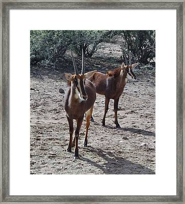 Out Of Africa B Framed Print
