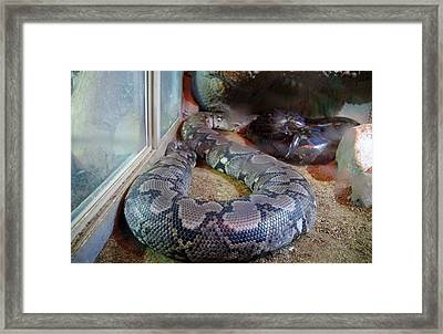 Out Of Africa  Black Snake Framed Print