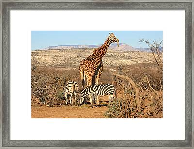 Out Of Africa Framed Print by Donna Kennedy