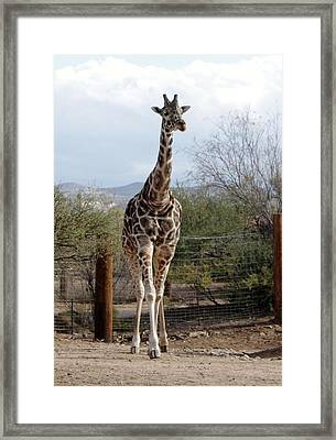 Out Of Africa  Giraffe 1 Framed Print
